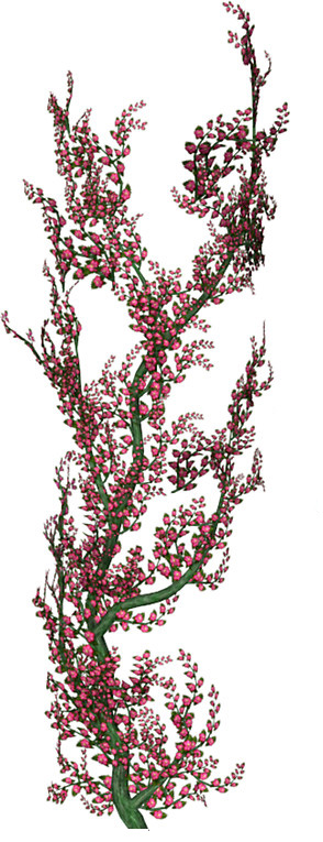drawing of a branch with red leaves